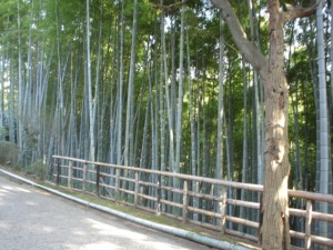 Bamboo forest on Enkaizan