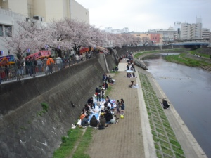 Cherry trees and Kashiogawa